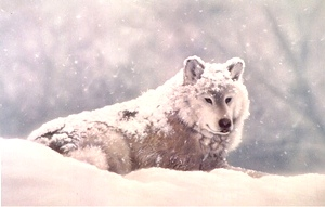 Randy Nagle - Snow Wolf